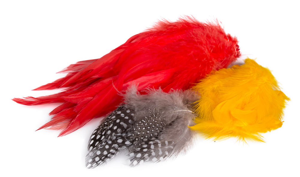 Hackles and Feathers