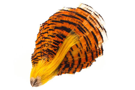 H.S.C. Golden Pheasant Head