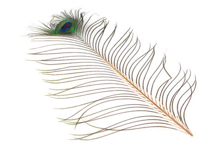 H.S.C. Peacock Eye Feather
