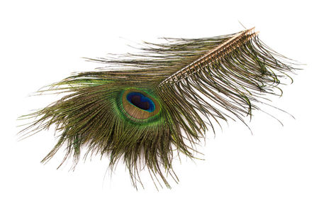 H.S.C. Peacock Eye Feather 5-pack - #1