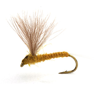 Runes CDC Nohackle - Light Olive