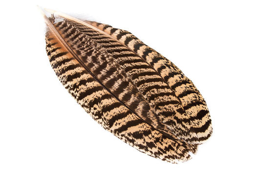 H.S.C. Peacock Wing Feather Pair - Extra Select